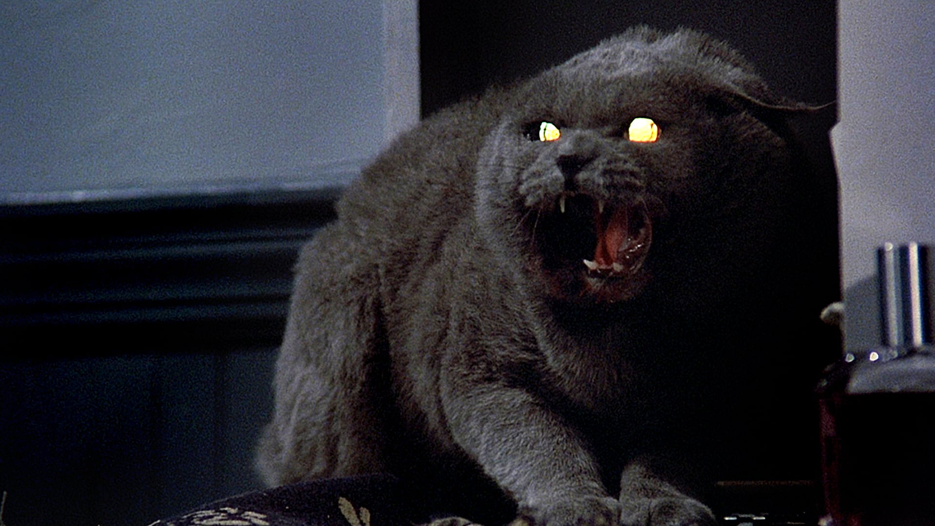 Church, the Creed family's demonic cat, in the original Pet Sematary